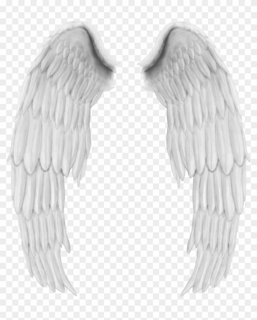 Asa de anjo clipart banner royalty free library Angel Wings, Collage, Free, Design, Wing Wing, Stickers, - Asas De ... banner royalty free library