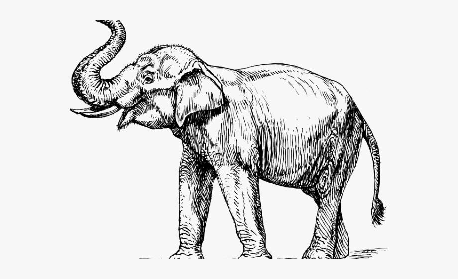 Asian elephant clipart jpg stock Asian Elephant Clipart Black And White - Elephant Trunk Up Drawing ... jpg stock