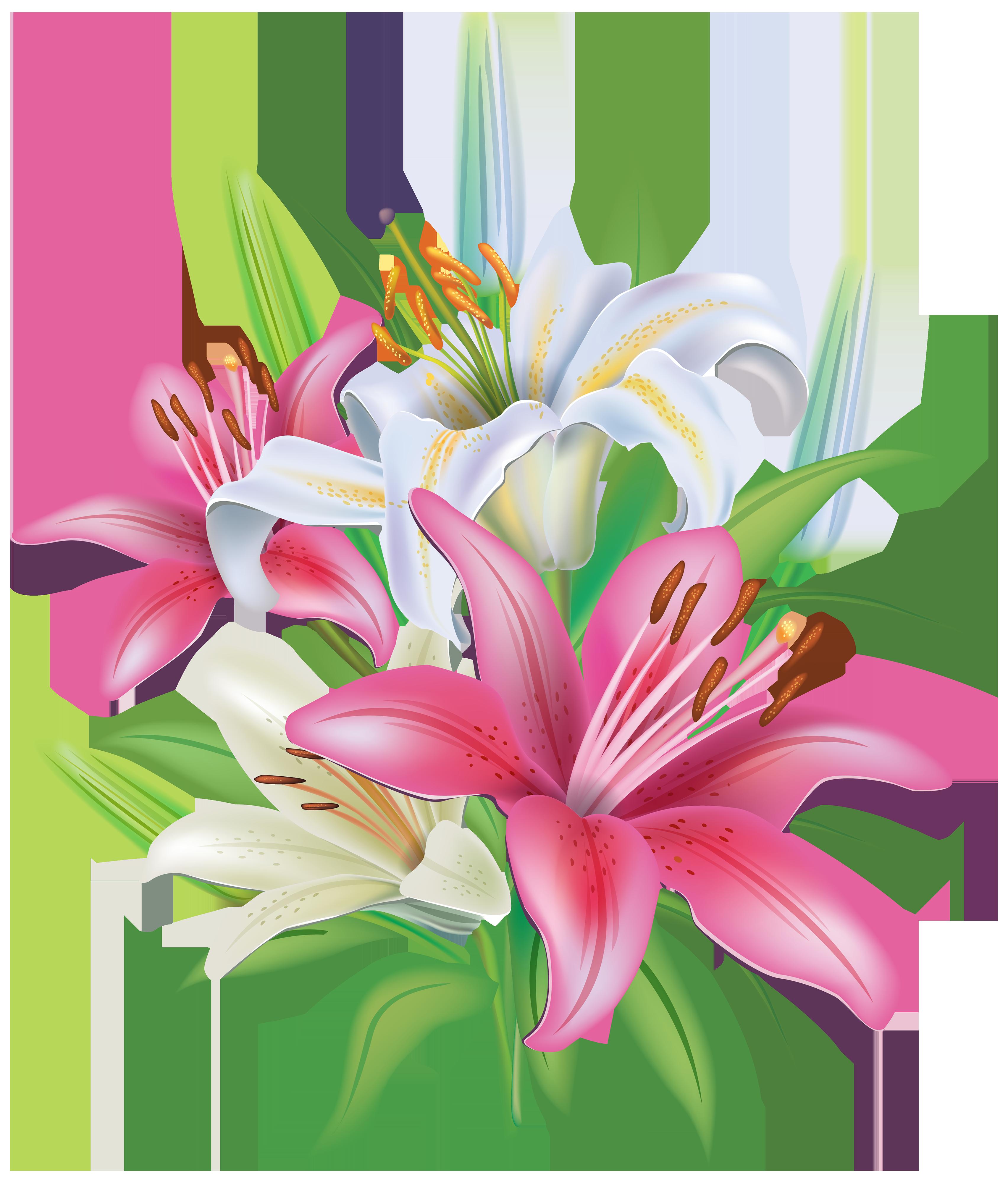 Pink lilies flores pinterest. Flower reaching for sun clipart