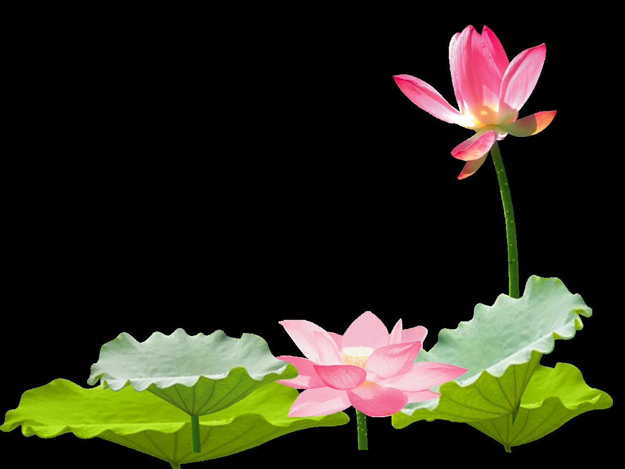 Asian flower clipart banner stock lotus flower chinese asian ftestickers... banner stock