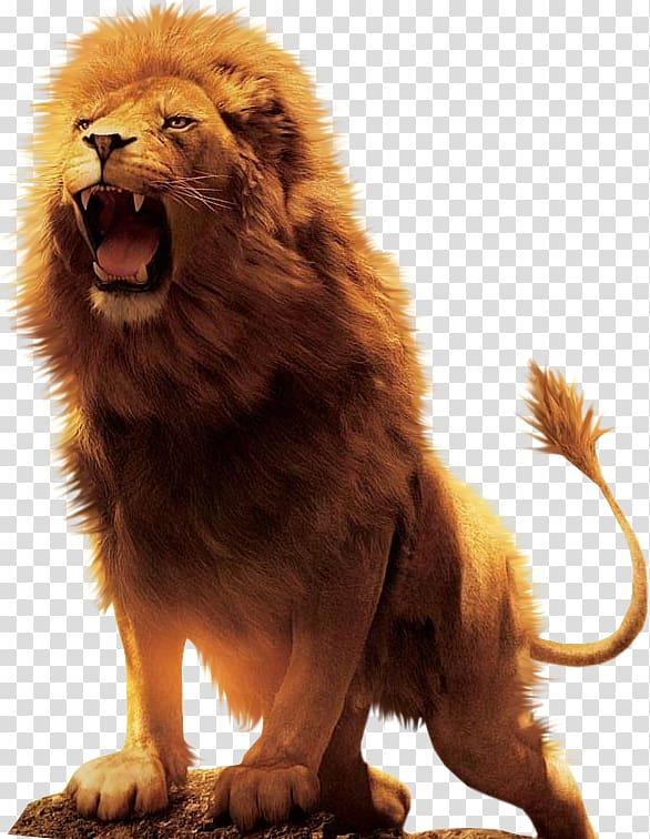 Aslan resmi clipart image free stock Roaring lion illustration, Aslan Lion Desktop , lion transparent ... image free stock