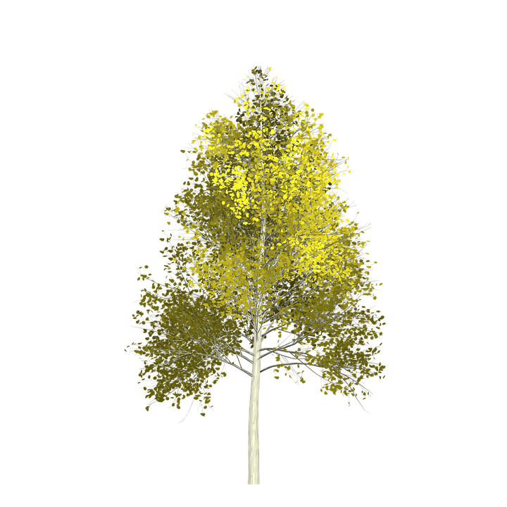 Aspen tree clipart image Free photo Green Aspen Nature Painted Tree Tree - Max Pixel image