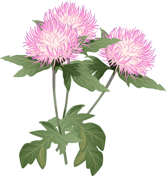 Aster flower clipart banner royalty free stock Pontiac's Rebellion: An Overview | Pinterest | Clip art, Window pane ... banner royalty free stock