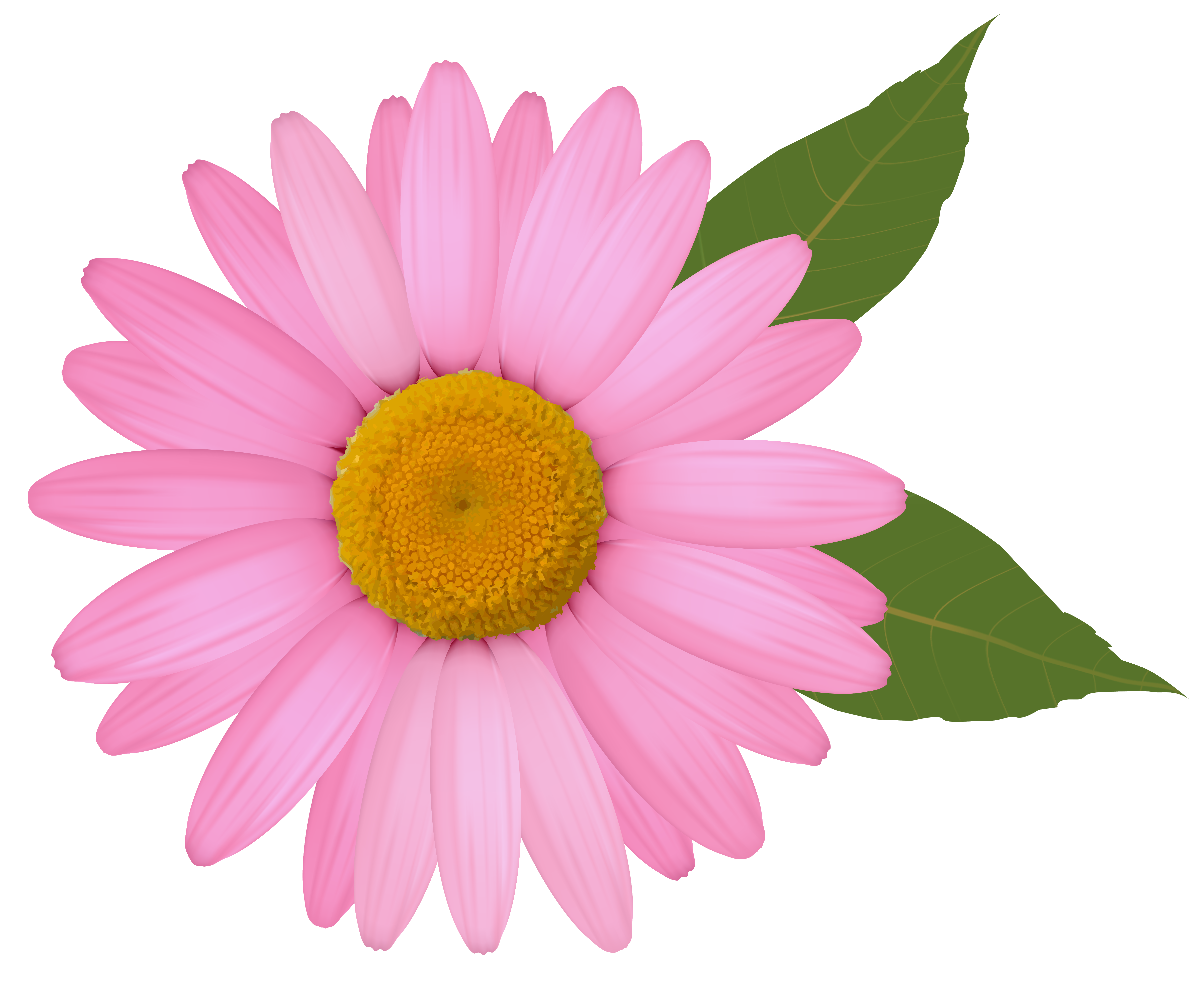Daisy flower border clipart graphic library stock Pink Daisy PNG Clipart Image | Gallery Yopriceville - High-Quality ... graphic library stock