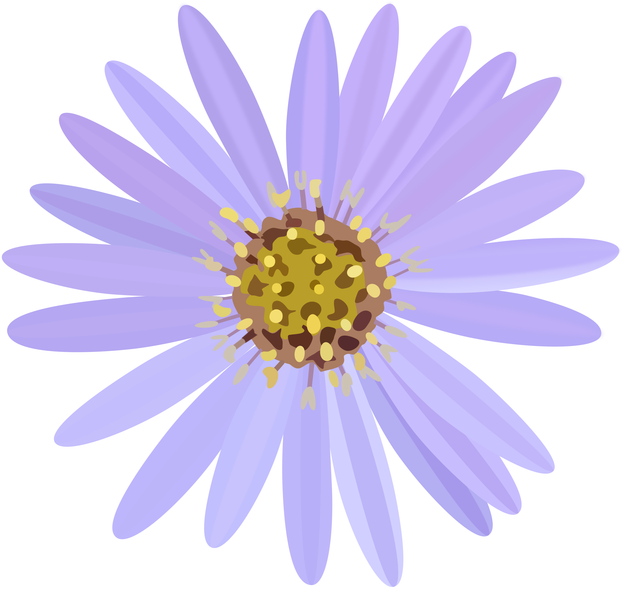 Aster flower clipart image black and white stock Clipart - aster image black and white stock