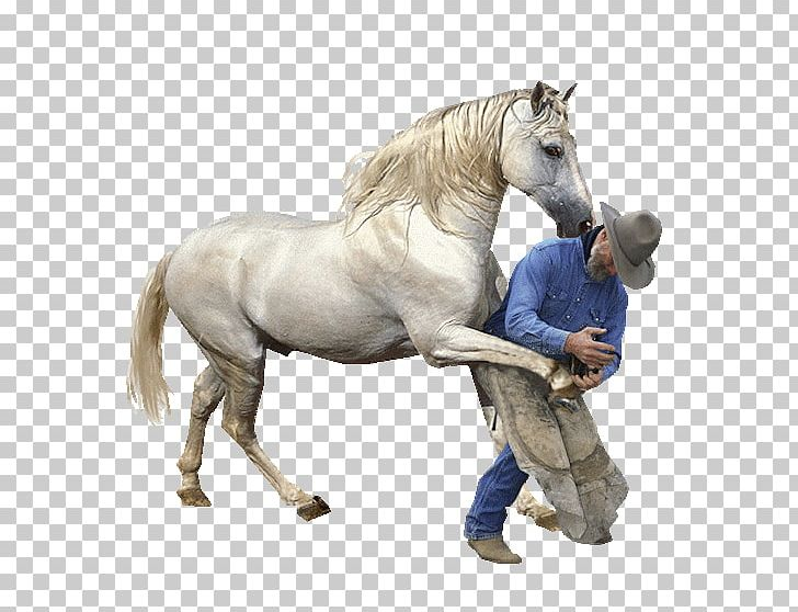 At resimleri clipart jpg black and white Horses Farrier Parage PNG, Clipart, Animal, Animal Figure, Animals ... jpg black and white