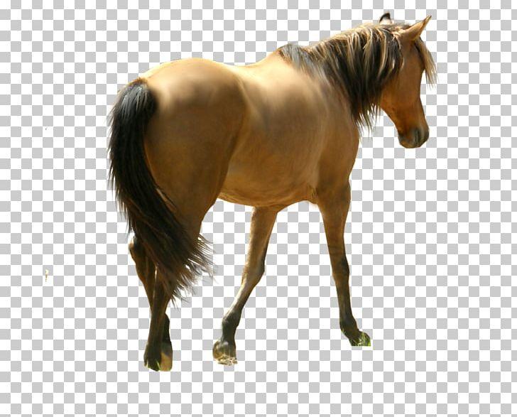 At resimleri clipart vector transparent stock Horse Desktop PNG, Clipart, Animals, At Resimleri, Bridle, Desktop ... vector transparent stock
