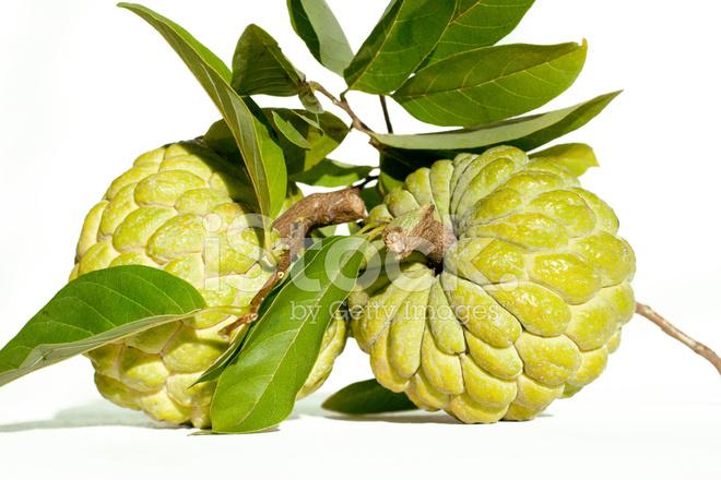 Atis fruit clipart