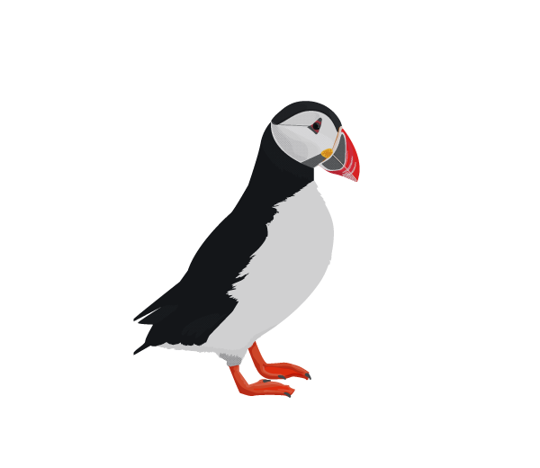 Atlantic puffin logo clipart