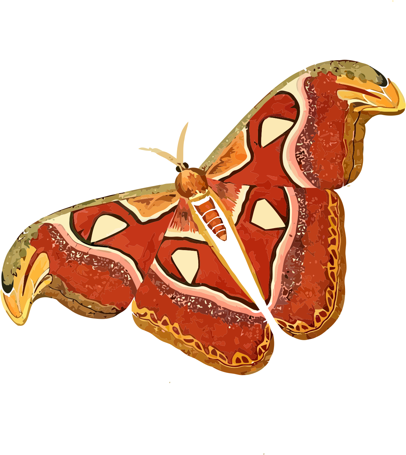Atlas book clipart image transparent stock Atlas moth - Attacus atlas Icons PNG - Free PNG and Icons Downloads image transparent stock