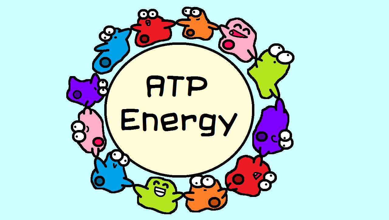 Atp energy clipart for kids banner library stock Pin by The Amoeba Sisters on Amoeba Sisters Images | Adrenal health ... banner library stock