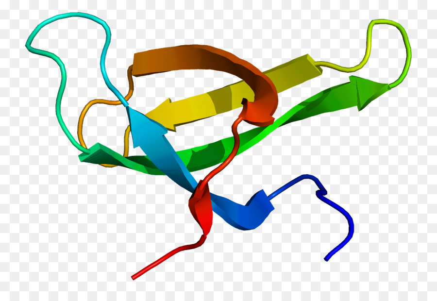 Atrophy clipart picture freeuse stock Survival of motor neuron clipart Survival of motor neuron Spinal ... picture freeuse stock