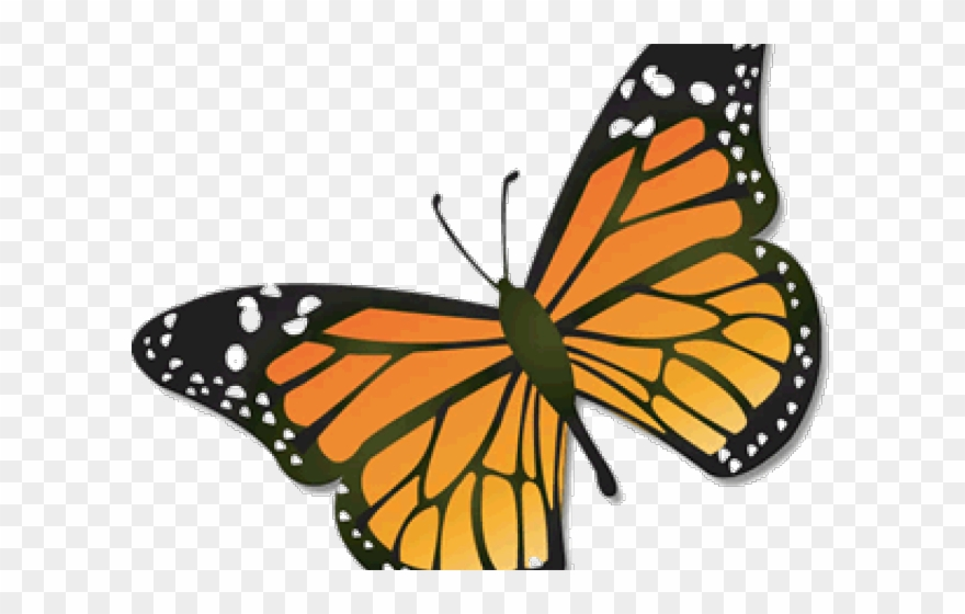 August clipart transparent background jpg download Monarch Butterfly Clipart August - Monarch Butterfly Clipart Cartoon ... jpg download