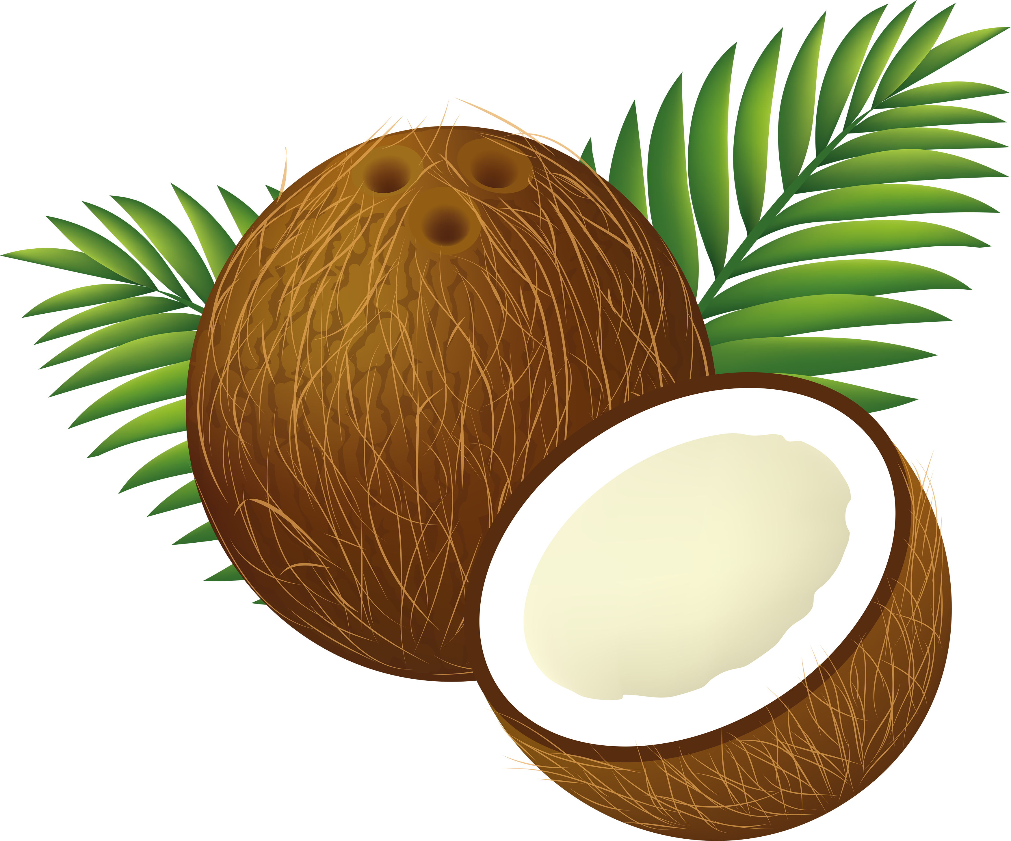 Coconut clipart image png royalty free download Clipart August Tree Collection #193233 - PNG Images - PNGio png royalty free download