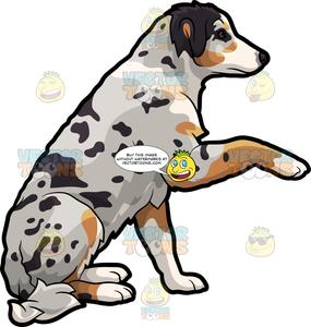 Australia shepard clipart image royalty free library A Trained Australian Shepherd Dog image royalty free library