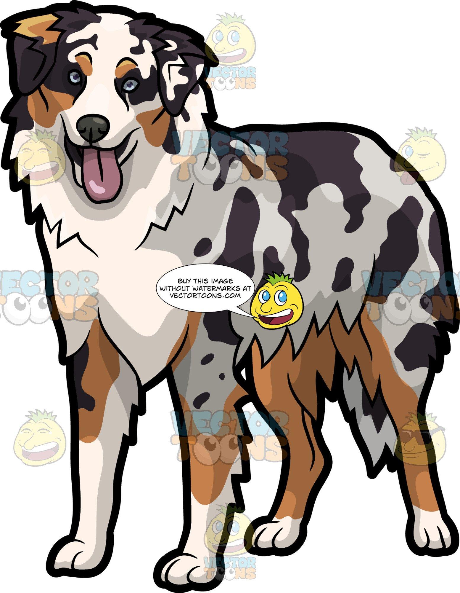 Australia shepard clipart picture free An Adorable Australian Shepherd Dog picture free