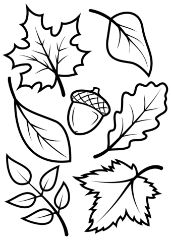 Autumn leaves coloring clipart png black and white download Fall Leaves and Acorn coloring page from Fall category. Select from ... png black and white download