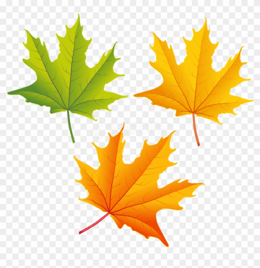 Autumn leaves pictures clipart png library stock Free Png Download Set Of Autumn Leaves Clipart Png - Autumn Leaves ... png library stock