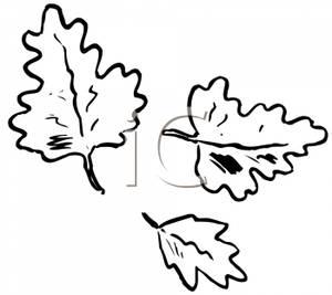 Autumn oak leaf black and white clipart picture free library Black and White Autumn Oak Leaves - Royalty Free Clipart Picture picture free library