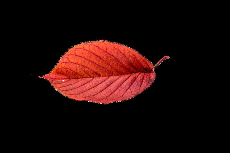Autumn sun clipart download Autumn Sun PNG Transparent Autumn Sun.PNG Images.   PlusPNG download