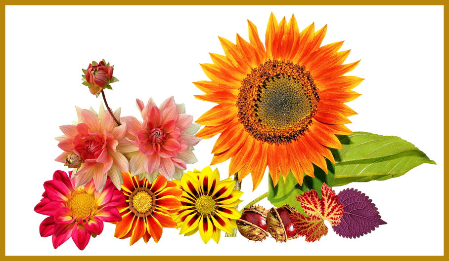 Autumn sun clipart vector library stock Marvelous Garden Autumn Sun Flower Colours For Sunflower Leaf Png ... vector library stock