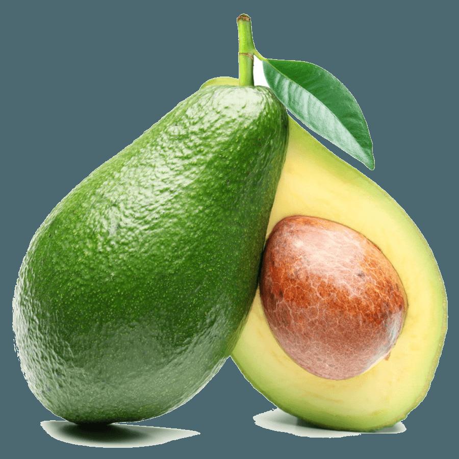 Avocado tree clipart svg black and white stock Education - LostLeaf Naturals CBD svg black and white stock