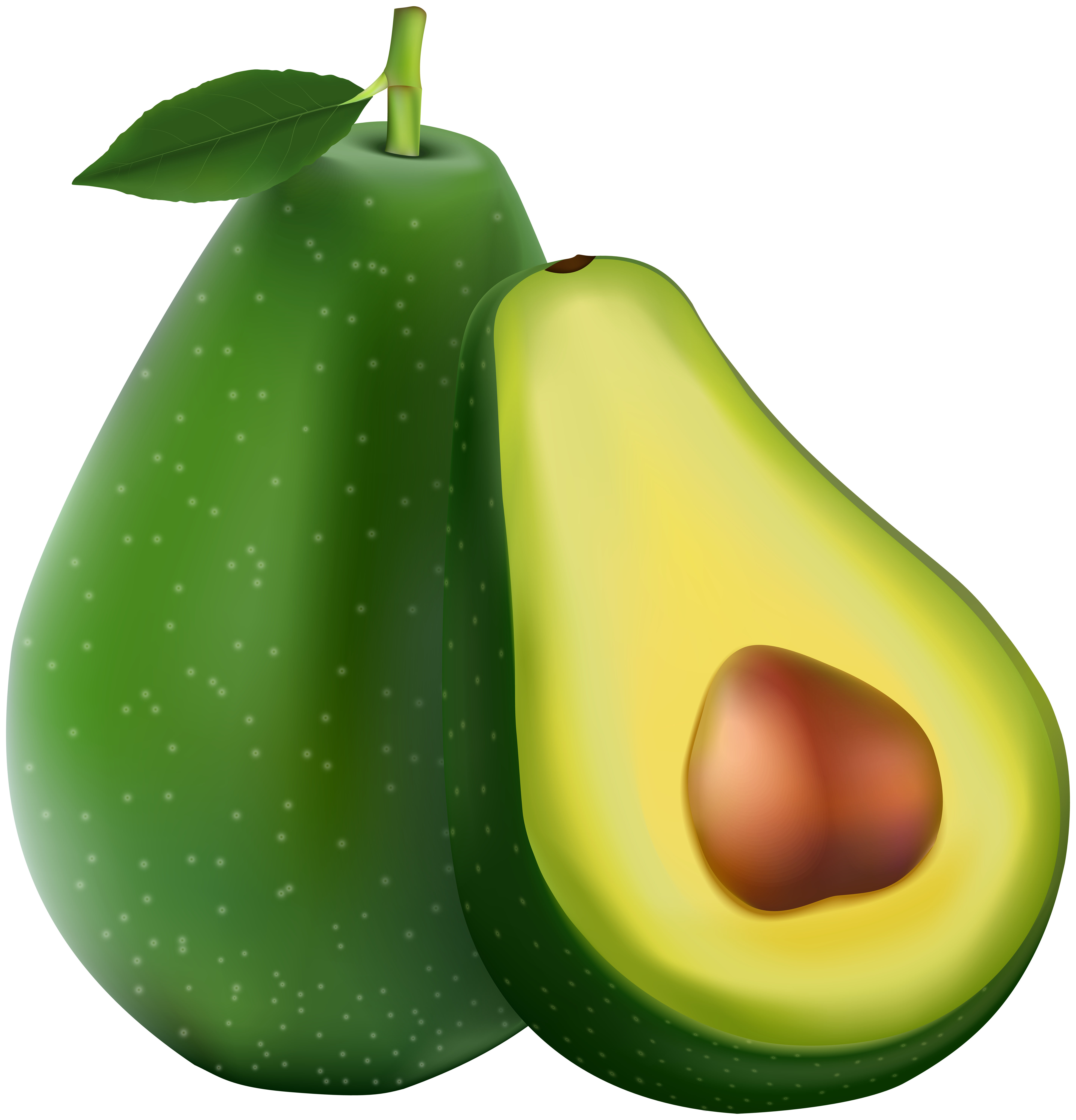Avocado tree clipart banner library download Avocado Transparent PNG Image   Gallery Yopriceville - High-Quality ... banner library download