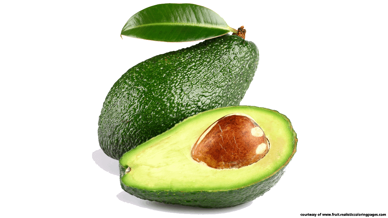 Avocado tree clipart graphic library stock 14 Great Avocado Fruit Clipart Free Download - Fruit Names A-Z With ... graphic library stock