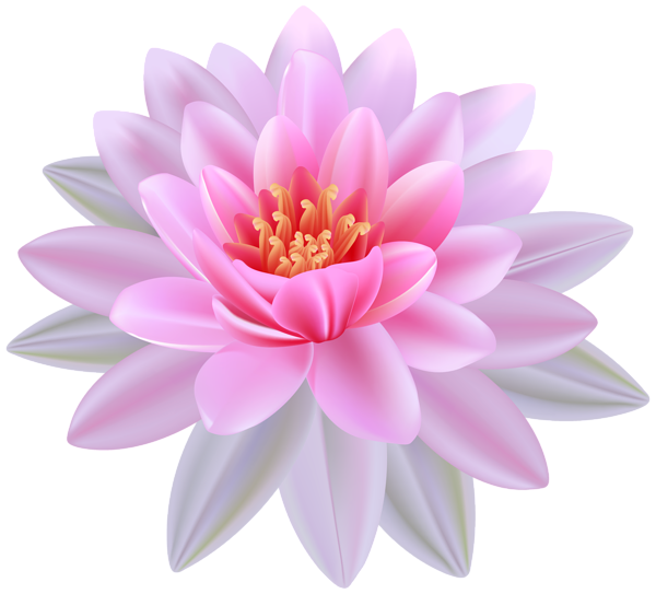 Flower clipart transparent. Pink water lily png