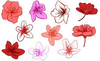 Azalea flowers clipart banner royalty free Azalea Free Vector Art - (63 Free Downloads) banner royalty free