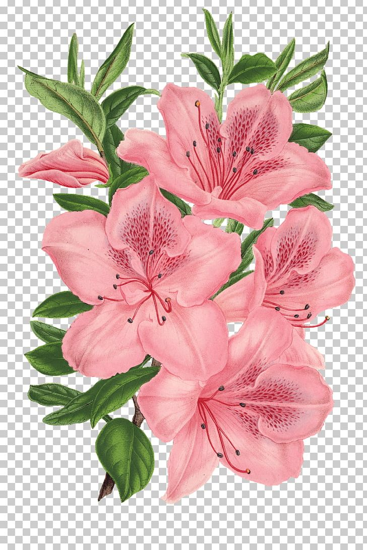 Azalea flowers clipart graphic black and white library Pink Bunch Drawing Pink Flowers Floral Design PNG, Clipart ... graphic black and white library