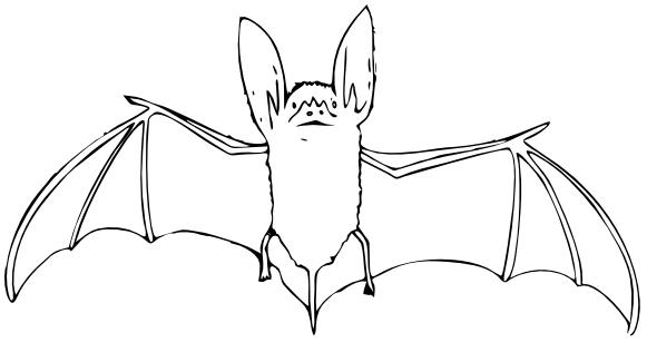B is bat clipart image library download Download Free png bat outline /animals/B/bat/bat clip art/bat ... image library download