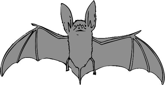B is bat clipart vector transparent download bat big eared - /animals/B/bat/bat_big_eared.png.html vector transparent download