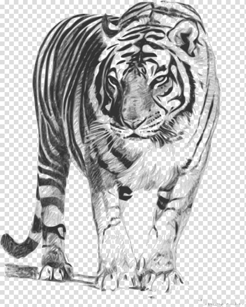 Baby bengal tiger clipart black and white vector library library Bengal cat Bengal tiger Lion Felidae , cincinnati bengals ... vector library library