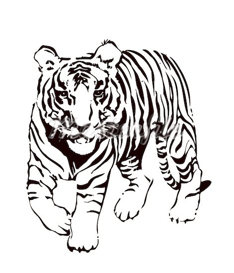 Baby bengal tiger clipart black and white banner free stock Tiger Clipart | Free download best Tiger Clipart on ClipArtMag.com banner free stock