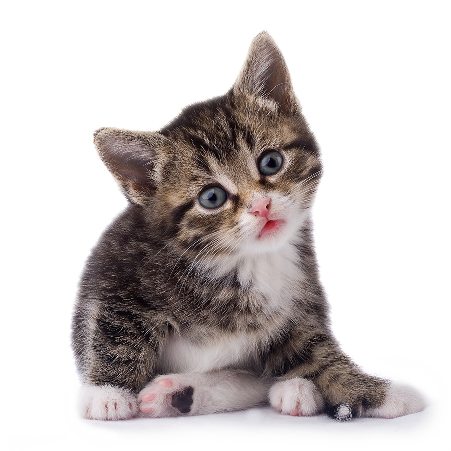 Baby cat clipart png freeuse stock Baby Cat PNG Transparent Baby Cat.PNG Images. | PlusPNG png freeuse stock