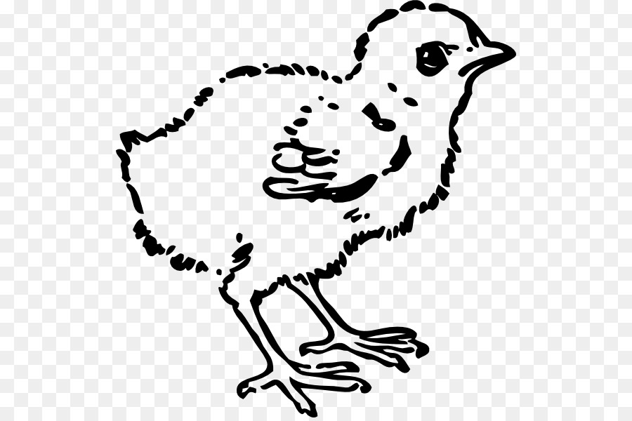 Baby chicks clipart black and white free image library Bird Line Drawing png download - 570*595 - Free Transparent Chicken ... image library