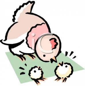 Baby chicks following mom clipart png free download A Colorful Cartoon of Baby Chicks Peeping At Their Mother - Royalty ... png free download