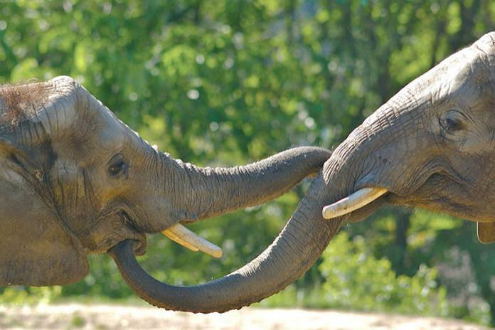 10 extraordinary facts about elephant trunks | TreeHugger banner free library