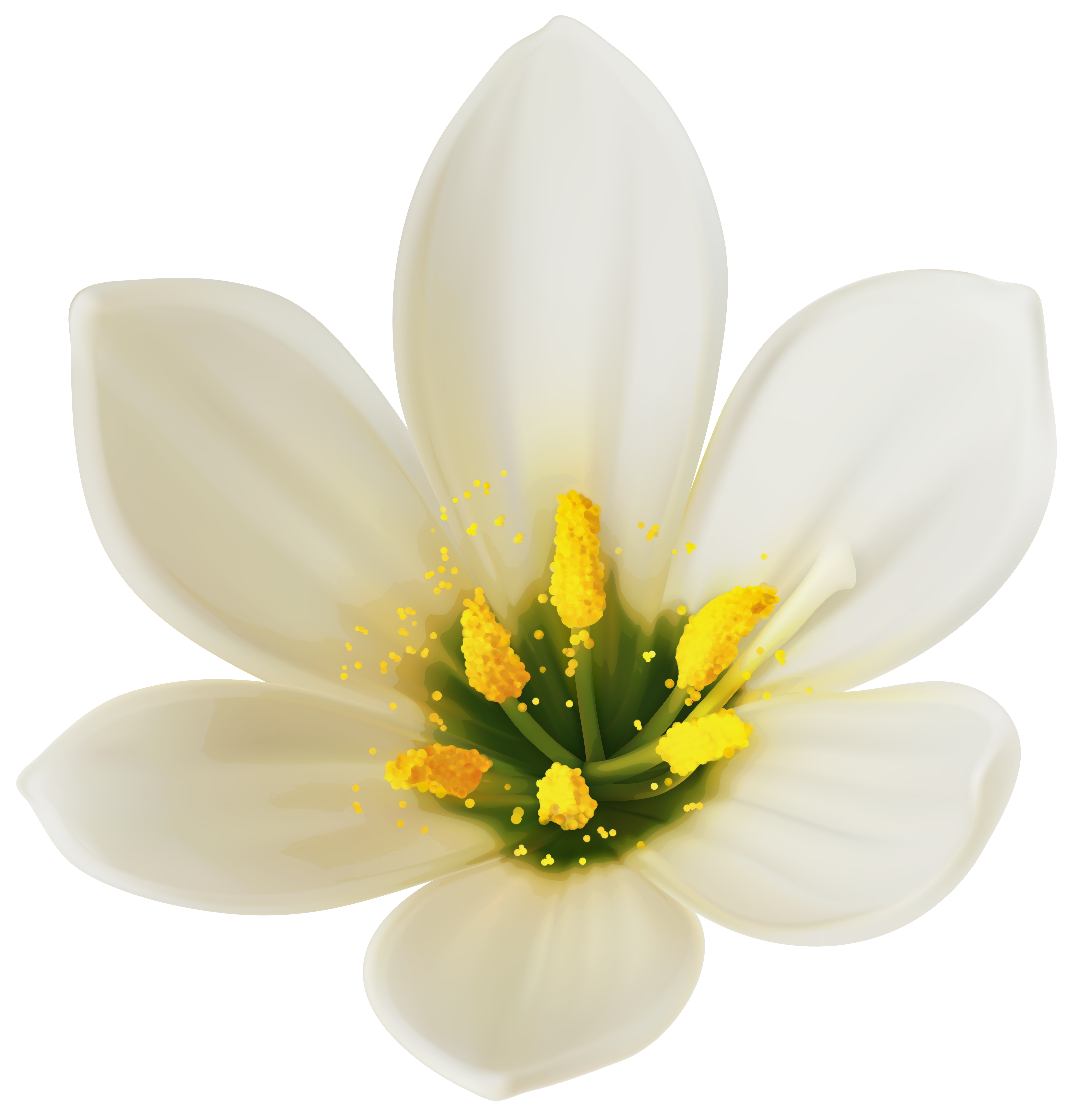Baby flower clipart png free library White Flower PNG Clipart Image | Gallery Yopriceville - High ... free library