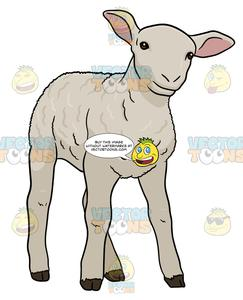 Baby lamb clipart for photoshop vector png royalty free download Little White Lamb png royalty free download
