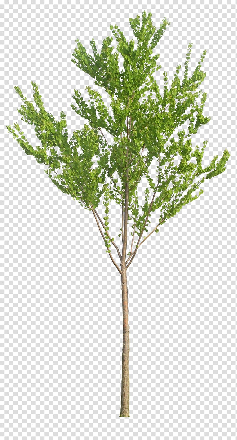 Baby plant clipart banner Tree Baby\\\'s-breath Artificial flower Plant, tree transparent ... banner