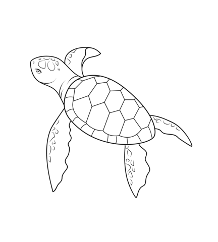 Baby sea turtle clipart black and white clip download Baby Turtle coloring page | Free Printable Coloring Pages clip download