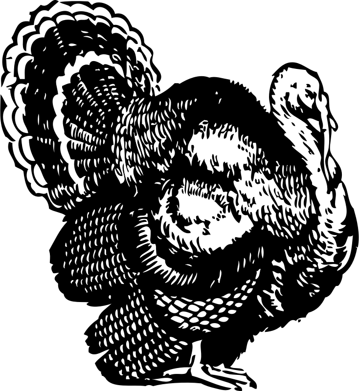 Free turkey clipart black and white banner library library Line Drawing Of Turkey at GetDrawings.com | Free for personal use ... banner library library