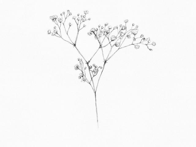 Baby-s breath flower clipart banner transparent library Free Babys Breath Clipart, Download Free Clip Art on Owips.com banner transparent library