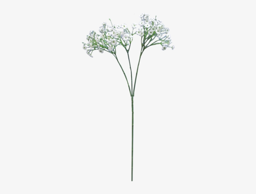 Baby-s breath flower clipart clipart royalty free library Baby Breath Flower Png Clip Free - Baby\'s Breath Flower Transparent ... clipart royalty free library