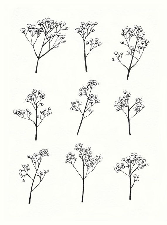 Baby-s breath flower clipart vector royalty free download Gypsophila - Baby\'s Breath Flower Illustration - A4 Print of ... vector royalty free download