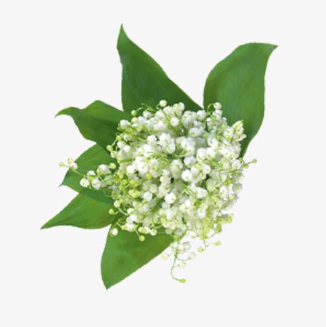 Baby Breath Flower Png, Vector, PSD, and Clipart With Transparent ... clip black and white