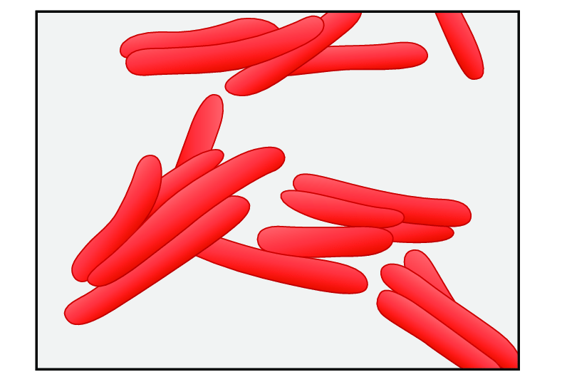 Bacilli clipart banner freeuse Schematic picture of the appearance and shape of tuberculosis ... banner freeuse