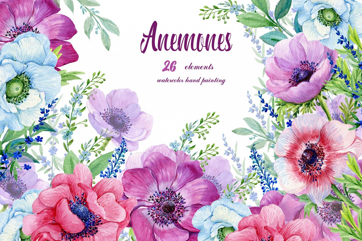 Anemones Watercolor . Flowers Clipart . Purple Flowers. Floral Elements.  Flower Backgrounds. Watercolor Clipart.Boho clipart vector black and white